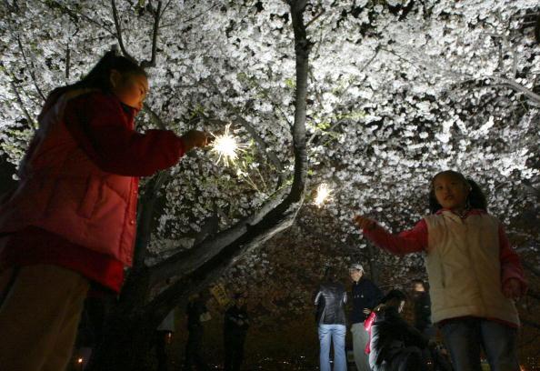 夜桜「Cherry Blossoms Bloom In South Korea」:写真・画像(0)[壁紙.com]