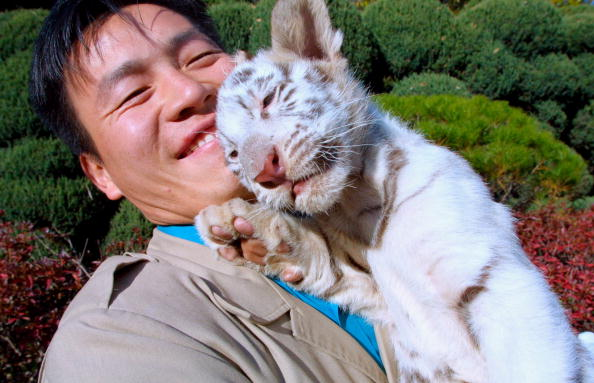 Positioning「Baby White Tiger In S. Korea」:写真・画像(17)[壁紙.com]