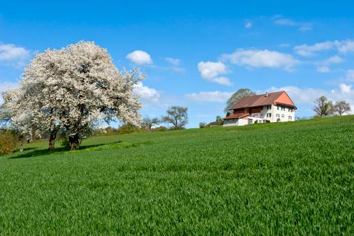 Vaud Canton「An apple tree in full bloom on a sunny day」:スマホ壁紙(13)
