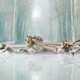 Fountain Of Apollo壁紙の画像(壁紙.com)