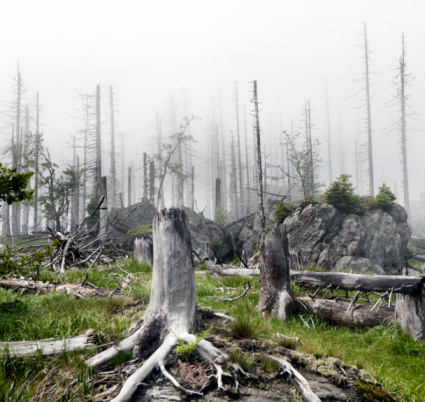 Tree Trunk「stump in a forest during morning fog」:スマホ壁紙(18)