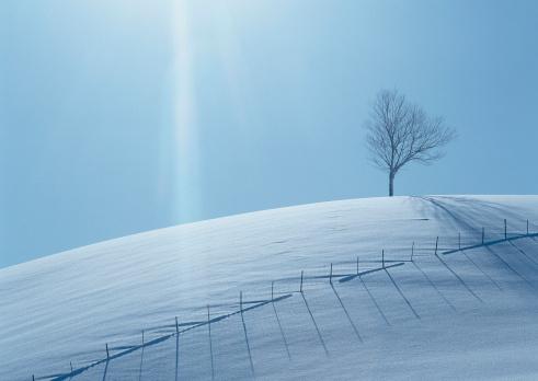 雪「Snowy Field and Tree」:スマホ壁紙(8)