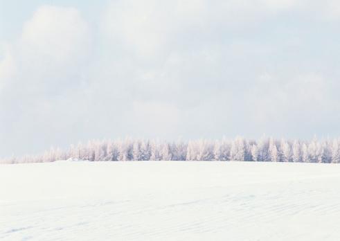 Hokkaido「Snowy Field」:スマホ壁紙(1)