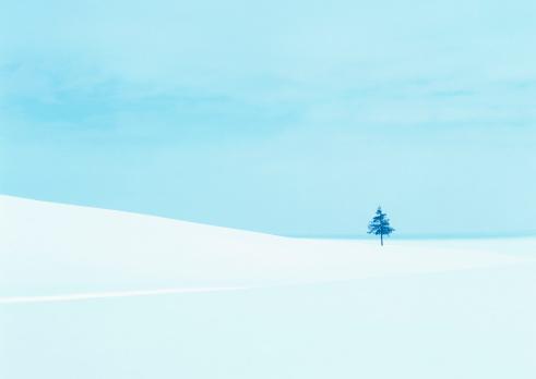 Single Tree「Snowy Field」:スマホ壁紙(0)