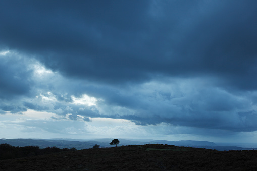 Twilight「Lone pine tree under stormy skies.」:スマホ壁紙(4)