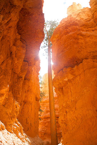 Pretty「Lone pine tree between golden walls, Bryce Canyon National Park, Utah」:スマホ壁紙(8)