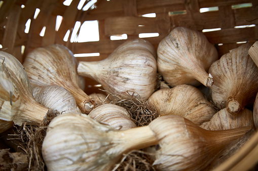 Garlic Clove「garlic cloves」:スマホ壁紙(16)