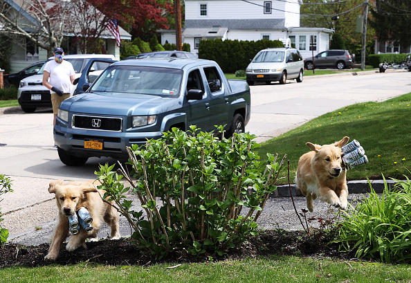 Grass Family「Long Island Brewery Uses Dogs To Help Deliver Beer To Customers」:写真・画像(0)[壁紙.com]