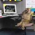 Monkey壁紙の画像(壁紙.com)