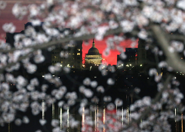 Cherry Blossom「Cherry Blossoms Begin To Bloom In Washington, DC」:写真・画像(3)[壁紙.com]