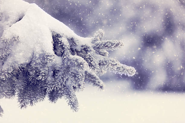 冬の日:スマホ壁紙(壁紙.com)
