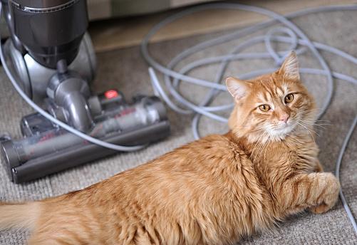 Kitten「Pet Hair Problem」:スマホ壁紙(1)