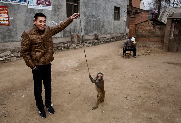 Chinese Culture「Chinese New Year Boosts Monkey Business for Villagers」:写真・画像(18)[壁紙.com]