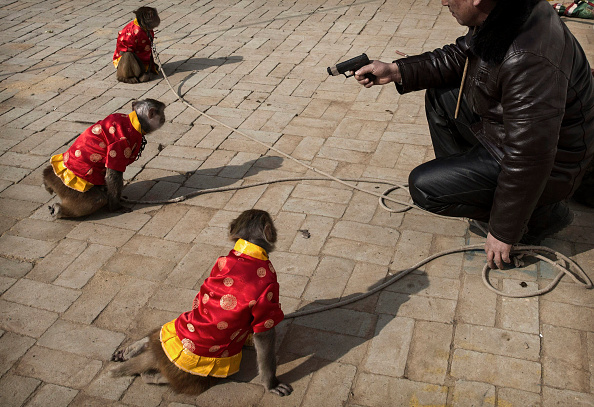 Kevin Frayer「Chinese New Year Boosts Monkey Business for Villagers」:写真・画像(16)[壁紙.com]