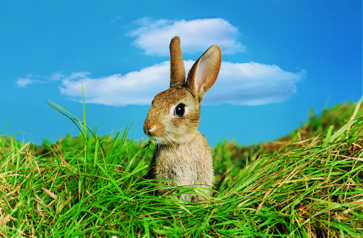 Headshot「Rabbit in Field」:スマホ壁紙(18)