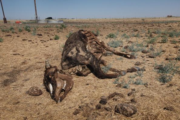 Damaged「Record Heat Wave Exacerbates Devastating Drought In Central U.S.」:写真・画像(18)[壁紙.com]