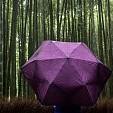 Bamboo Grove壁紙の画像(壁紙.com)