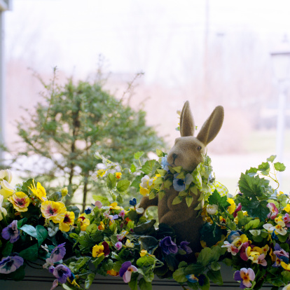 朝顔「Stuffed toy bunny in flower box of morning glories (Ipomea sp)」:スマホ壁紙(17)