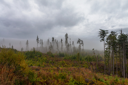 Eco Tourism「Vancouver Island Foggy Forests」:スマホ壁紙(12)