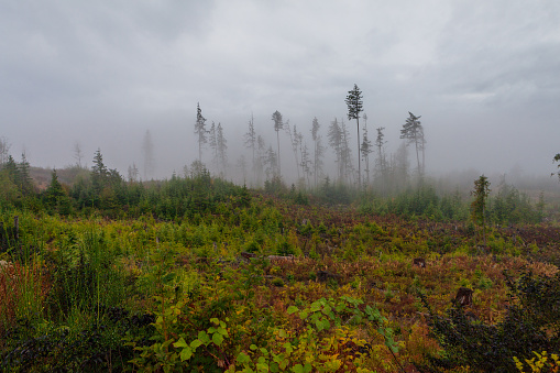 Eco Tourism「Vancouver Island Foggy Forests」:スマホ壁紙(13)