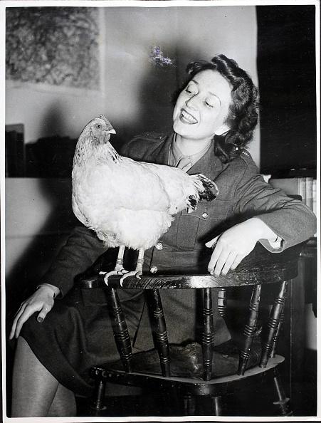 Hen「Introducing Hetty the Hen」:写真・画像(8)[壁紙.com]