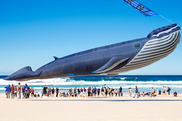 Animal「Festival Of The Winds Kite Festival Bondi」:写真・画像(18)[壁紙.com]