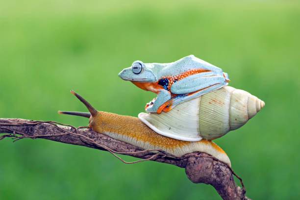 Tree frog sitting on a snail:スマホ壁紙(壁紙.com)