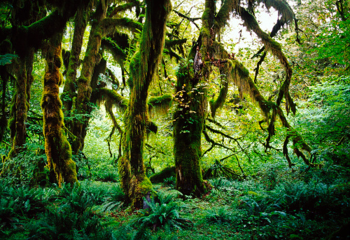 Overgrown「Olympic National Park, Washington, USA」:スマホ壁紙(5)