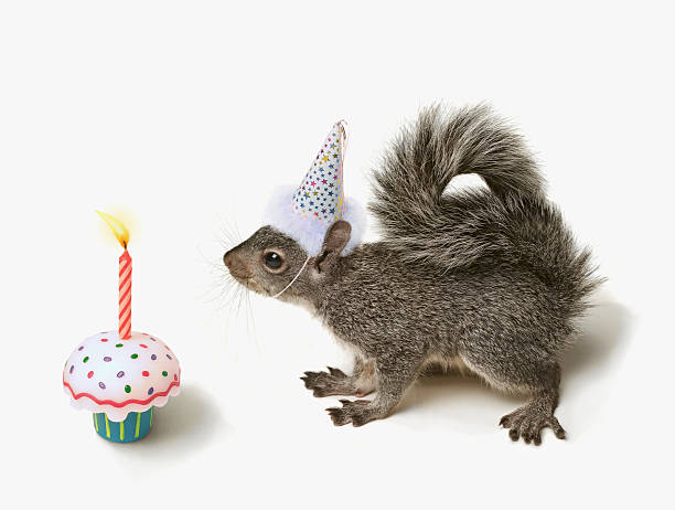 Squirrel wearing Party Hat blowing out candle :スマホ壁紙(壁紙.com)