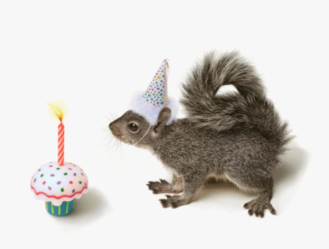 リス「Squirrel wearing Party Hat blowing out candle 」:スマホ壁紙(0)