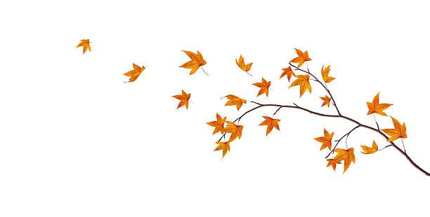 秋のブランチ:スマホ壁紙(壁紙.com)