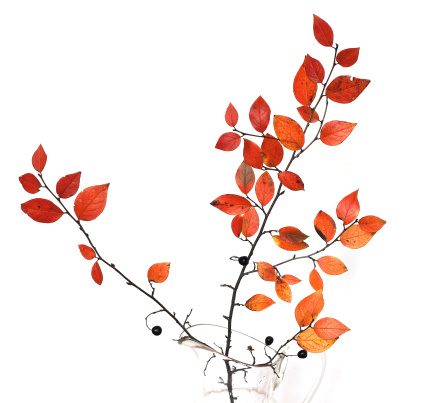 Floral Pattern「Autumn branch」:スマホ壁紙(8)