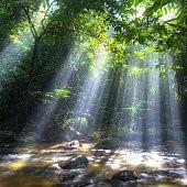 雨林壁紙の画像(壁紙.com)