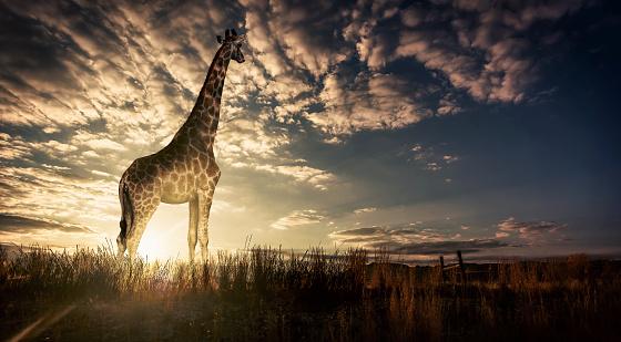 South Africa「Lady at Sunset」:スマホ壁紙(0)