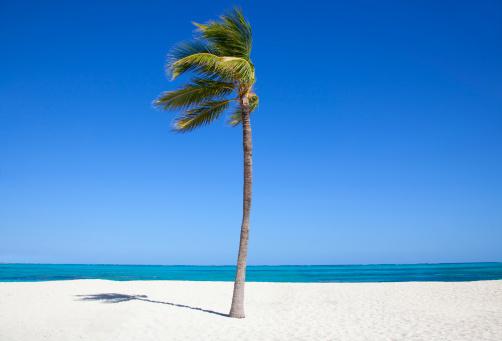 Single Tree「Single palm tee on beach.」:スマホ壁紙(9)