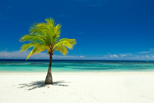 Single Tree「Single palm tree on tropical beach」:スマホ壁紙(7)