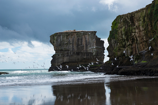 Wave「Gannets flying over Muriwai Beach at Otakamiro Point.」:スマホ壁紙(15)