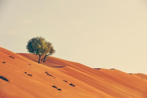 Fairy tale「growth in the desert of oman」:スマホ壁紙(12)