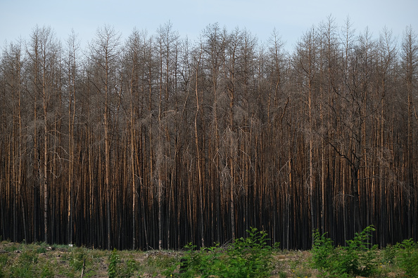Environmental Damage「Prolonged Dry Weather Hampers Reforestation Following Forest Fire One Year On」:写真・画像(7)[壁紙.com]