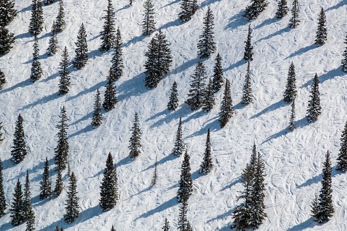 Mt Aspen「Pine trees interspersed on ski trail.」:スマホ壁紙(0)