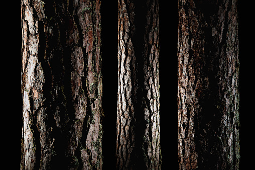 Plant Bark「Pine trees」:スマホ壁紙(2)