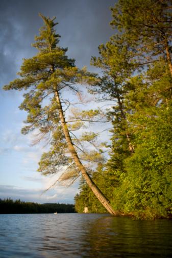 Adirondack Mountains「Pine trees by lake」:スマホ壁紙(7)