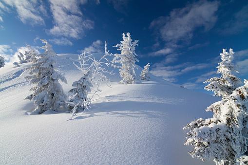 Lech Valley「pine trees in winter」:スマホ壁紙(13)