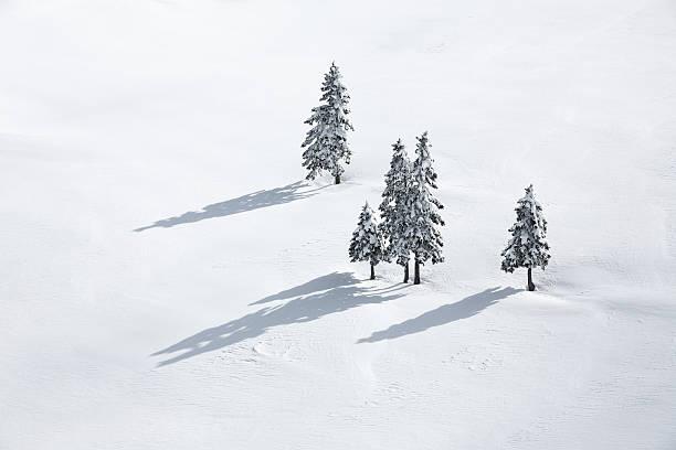 Pine Trees On White Field:スマホ壁紙(壁紙.com)
