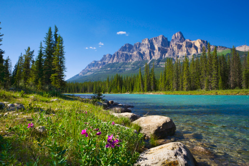 Banff National Park「Bow River, Castle Mountain, Banff National Park Canada, wildflowers, copyspace」:スマホ壁紙(7)