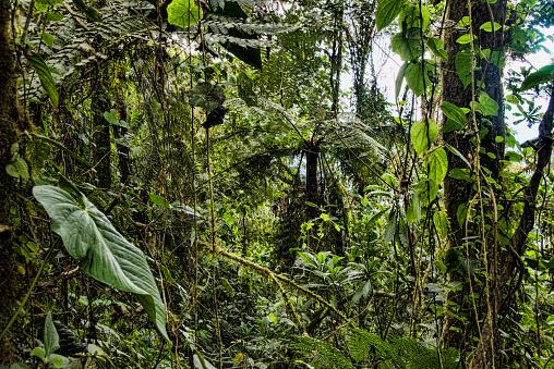 Amazon Rainforest「Cloud Forest scenic」:スマホ壁紙(12)