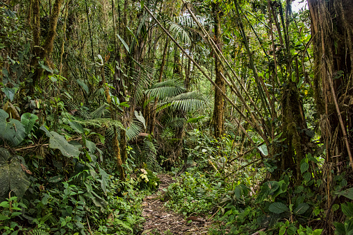 Amazon Rainforest「Cloud Forest scenic」:スマホ壁紙(9)