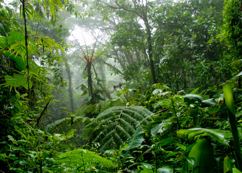 Central America「Cloud forest in Costa Rica」:スマホ壁紙(7)