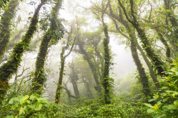 Cloud forest on volcano Maderas, Nicaragua:スマホ壁紙(壁紙.com)