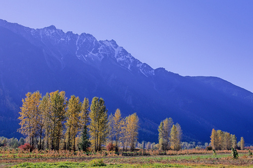 Pemberton「Farmland In Autumn Colors Is Pemberton, Bc, With Mt. Currie Above」:スマホ壁紙(13)